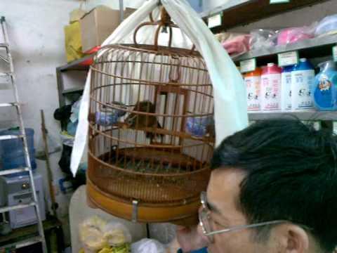 MrBufares - سوق الطيور في الصين الجزء الثاني