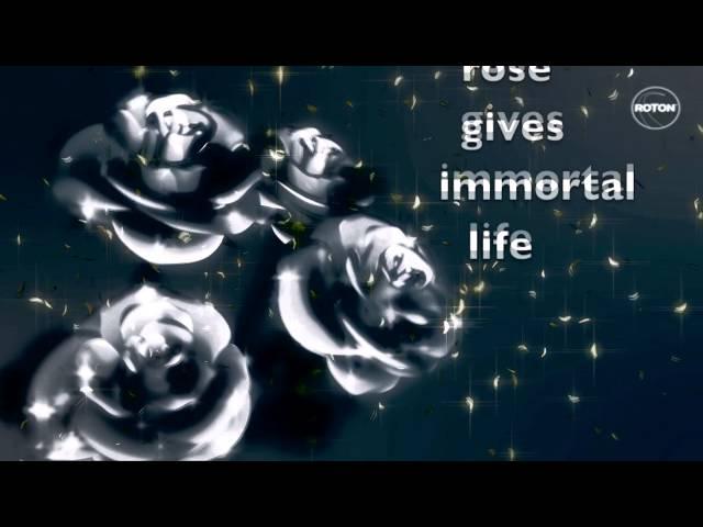 Stroke 69 - Black Rose (Radio Edit) (Lyric Video)