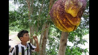 download musica Wow Smart Boy Show How To Get Honey Bee In Cambodia - Traditional Bee Hunting In My Village