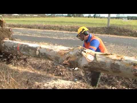 300 arbres contaminés par un chancre