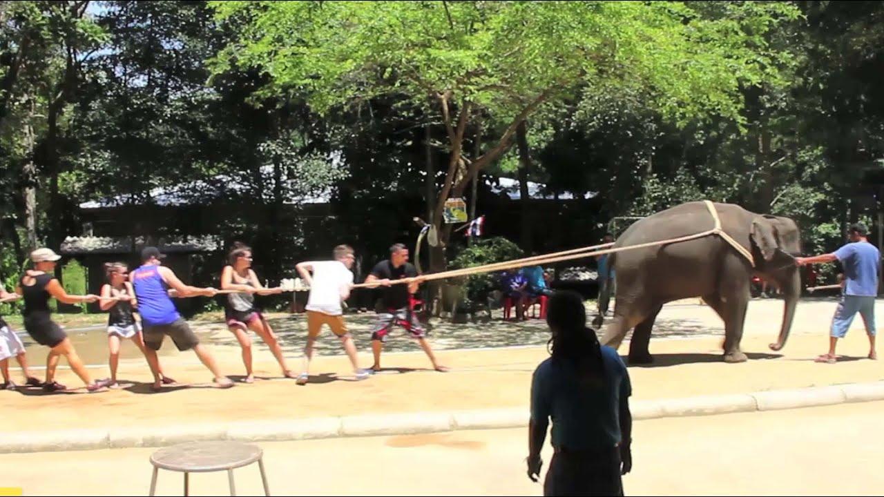 Elephant Crocodile Tug of War Elephant Tug of War