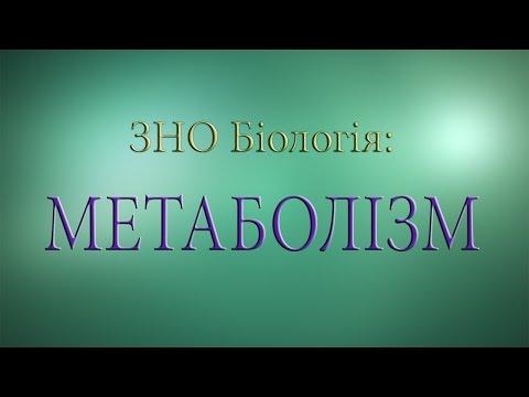 ЗНО Біологія. Метаболізм