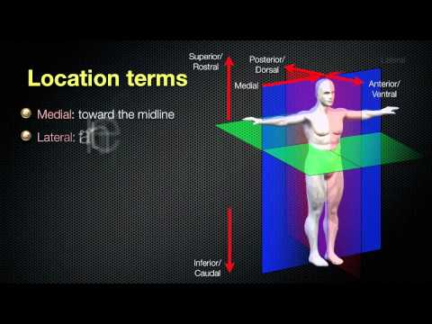 Anatomical Planes and Spatial Relationships in the Human Body