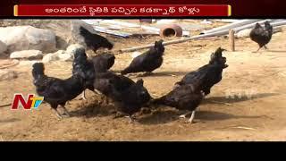 Special Story on Kadaknath Chicken || Kadaknath A Very High Nutritional Chicken Breed