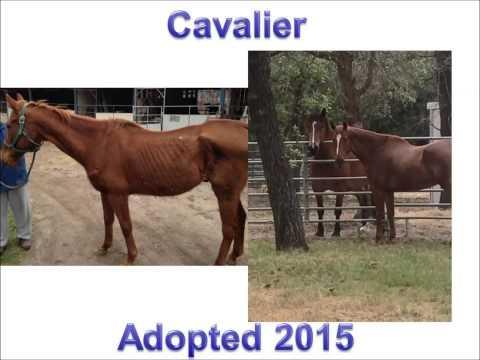 Horses of Bluebonnet Equine Humane Society 2015