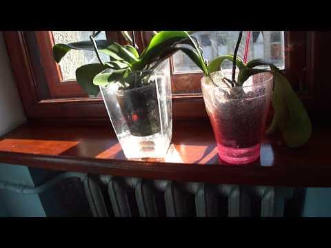 Орхидея вблизи батареи. Мой метод увлажнения. Часть 1.