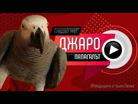 Папагалът Джаро - Къде е свободата мамо?