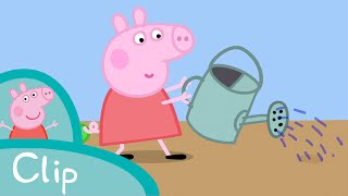 Peppa Pig Episodes - Growing strawberries (clip) - Cartoons for Children