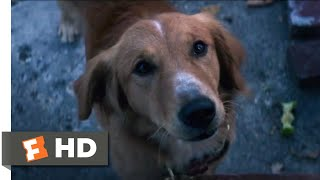 A Dog's Purpose (2017) - Coin Collecting Scene (2/10) | Movieclips