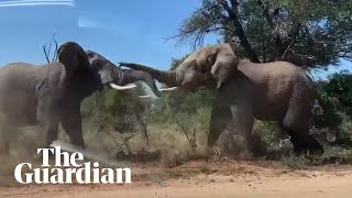 Coronavirus: wild animals relax in South Africa golf club during lockdown