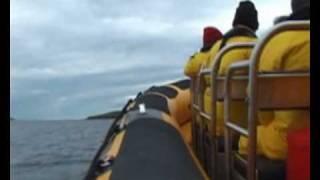 Ribcraft 9.0 Sea Safari Tourist Boat