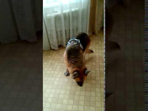 Собака стала причиной конфликта между соседями