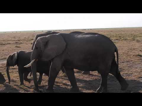 Elefant familie kom forbi