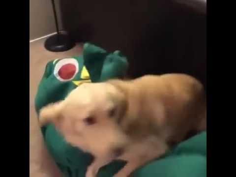 La reacción de un perro cuando su juguete favorito cobra vida