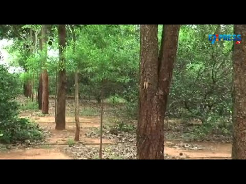Success story of Red Sandalwood and Sandalwood Farming - Paadi...
