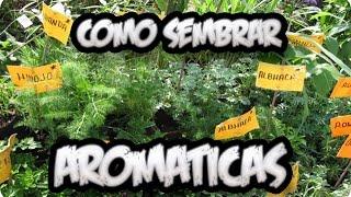 Como Sembrar Aromaticas || Tomillo Romero Perejil Lavanda Albahaca || La Huertina De Toni