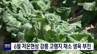 투/6월 저온현상 고랭지 채소 생육 부진