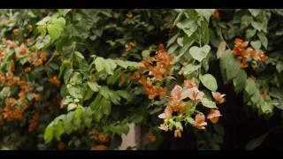 Phim Viet Nam - Hoa Cuối Mùa (Orange Bougainvillea)
