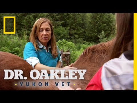 Socks the Swayback Horse | Dr. Oakley, Yukon Vet
