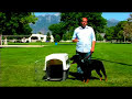 Dog Training Tips : How to Potty-Train Your Dog