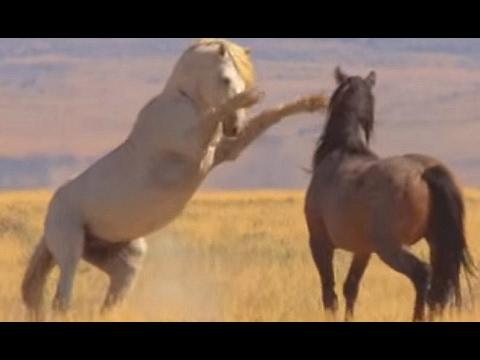 Mustangues Guerreiros