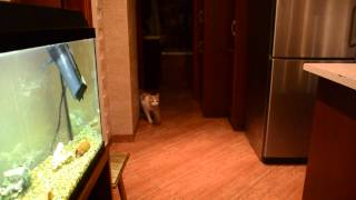 Awesome cat pretending to be a dog