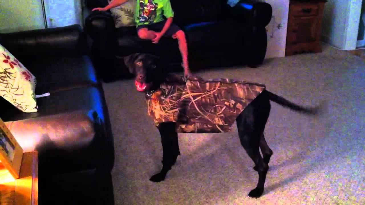 Dog Hunting Vests Dog Hates New Duck Hunting
