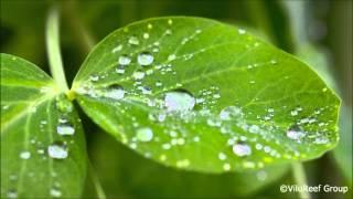 Download Lagu Rain 3 hours/Relaxing Sleep Sound Gratis STAFABAND