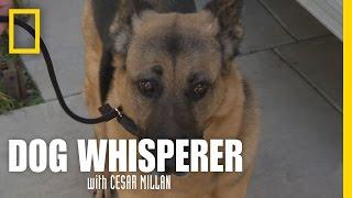 Learning the Leash   Dog Whisperer