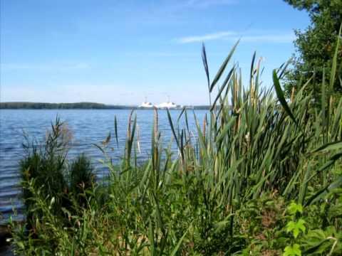 Десна-ТВ: Зарисовка: Лес и вода. 2014