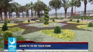 ALİAĞA'YA 100 BİN YAZLIK ÇİÇEK