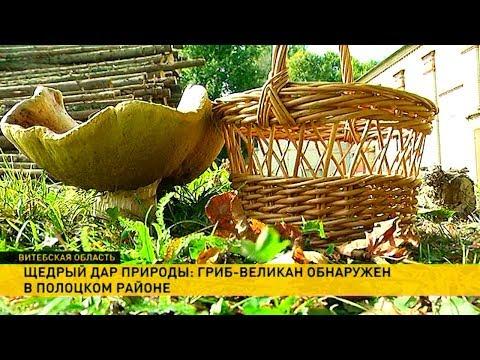 Гриб-гигант поразил жителей деревни под Полоцком