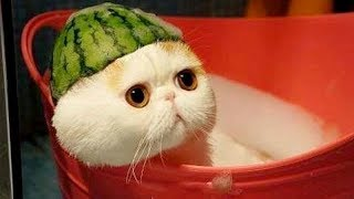 This ANIMAL COMPILATION will make you LAUGH even in your BAD DAYS 😊