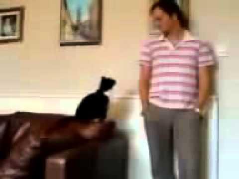 Кот напакостил и просит прощения