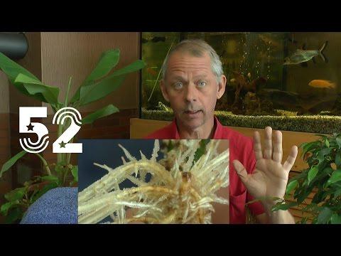 Die Sämlinge und wie geht es weiter mit den Exoten und anderen Pflanzen Teil 52