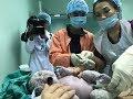 Cận cảnh ca sinh thường, em bé chào đời vào đúng thời khắc giao thừa 2019