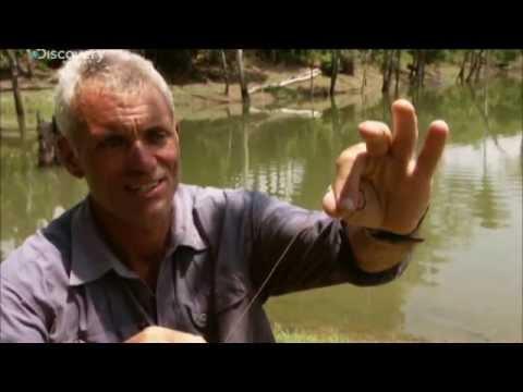 Рыбалка на озере - Речные монстры