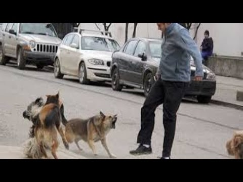 Ataque de animales salvajes a seres humanos parte 4  ||  Wild animals attack humans Part 4