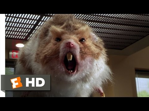 Nutty Professor 2: The Klumps (8/9) Movie CLIP - Giant Hamster Attack (2000) HD