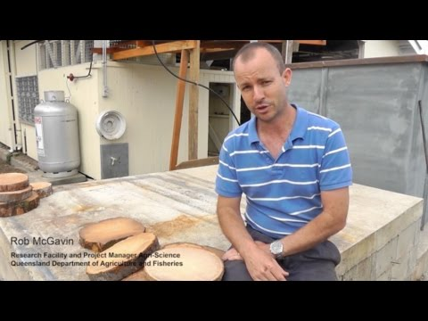 ACIAR CocoVeneer - The character of coconut wood