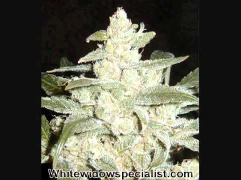 Top 10 most potent weed strains youtube