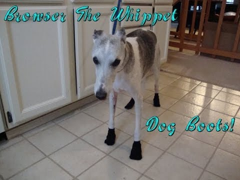 Browser The Whippet: Dog Boots