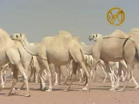 منقية محمد بن رشيد - الوضح