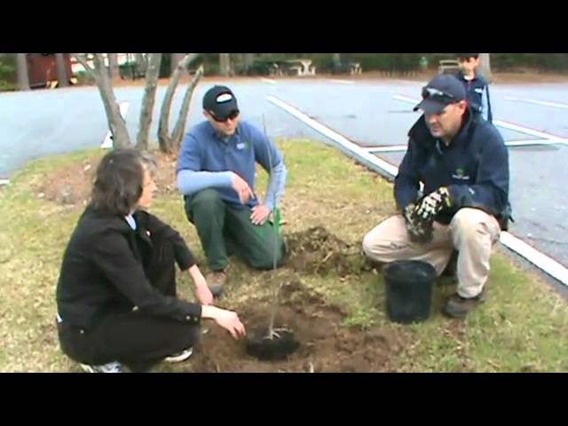 Tree Planting, Part 2: Digging the hole and placing the tree