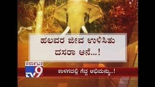 Mysore Dasara Elephant Abhimanyu Helped in Sending Wild Elephants to Forest at Davangere