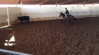 Jessi- Jared Lesh Cowhorses