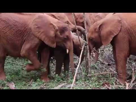 野生動物の象やキリンを保護するアフリカの保護団体の活動が素敵