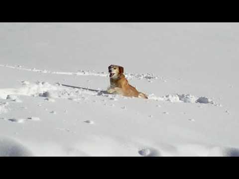 Smila e il suo senso per la neve