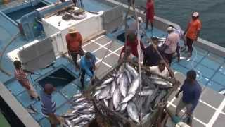 Tuna Fishing Industry Out of Control