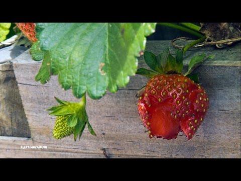 Как бороться с болезнями плодового сада (фото, название, описание и препараты)